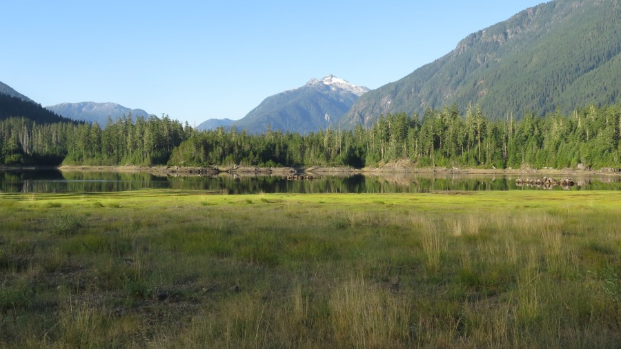 Camping in Strathcona Park (Ralph River Campground)